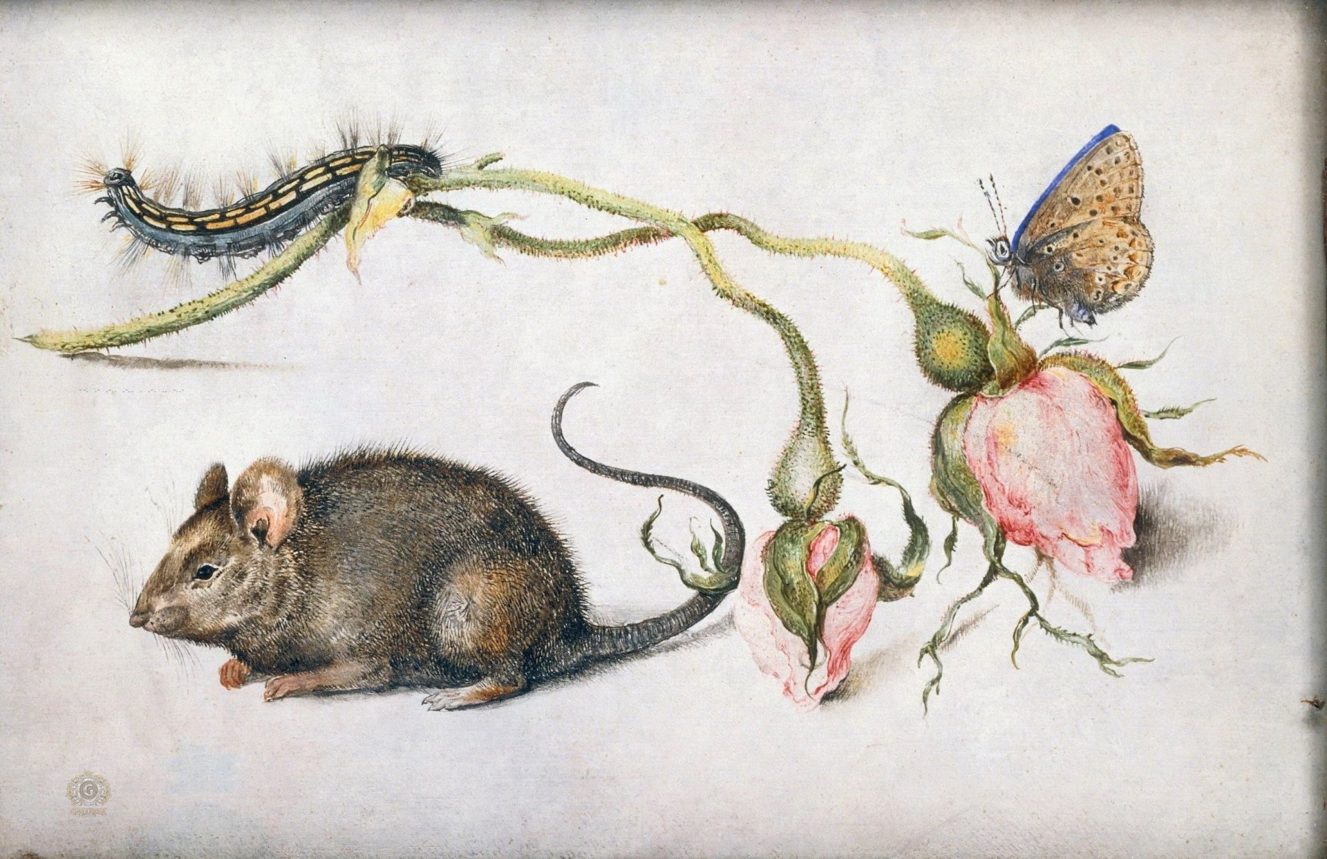 Мышь и роза 1.jpg