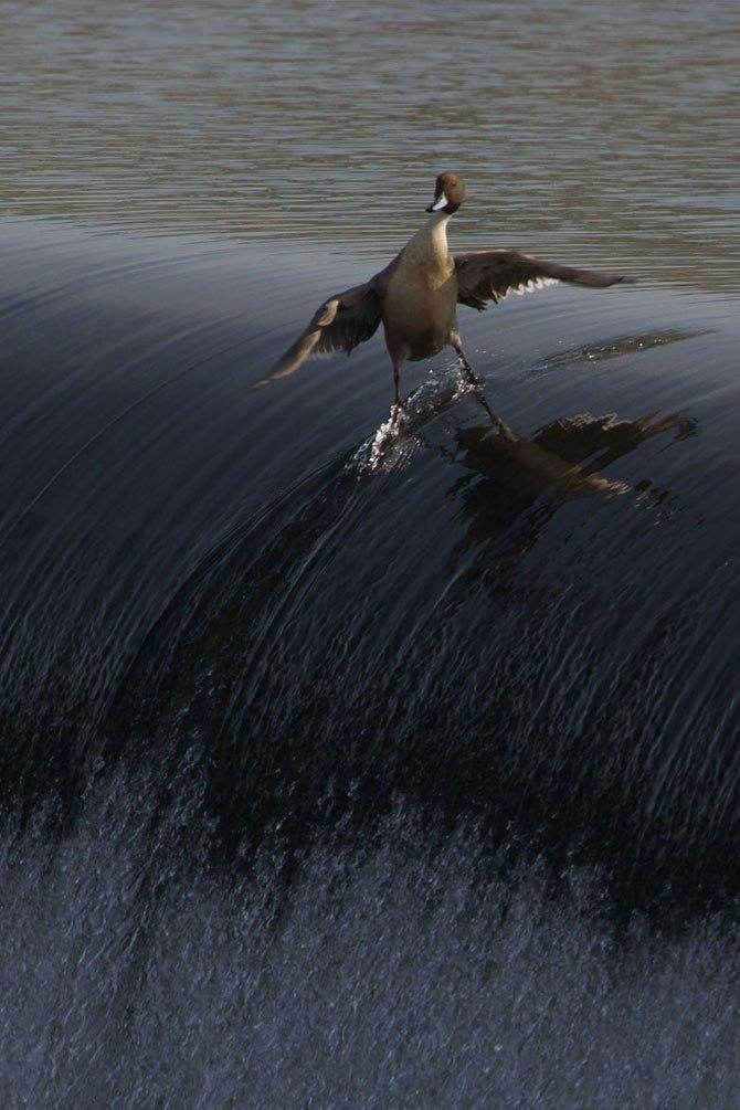 Серфингист.jpg