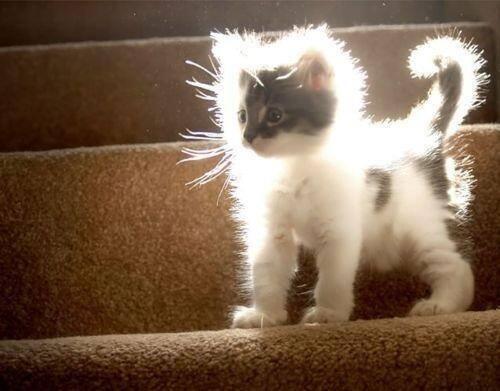 Солнечный котенок!.jpg