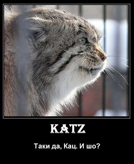 Таки katz.jpg