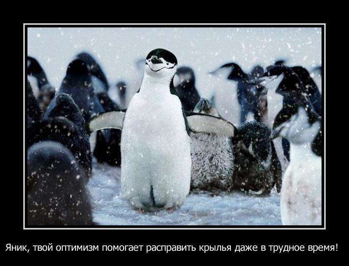 Яник-оптимист.jpg