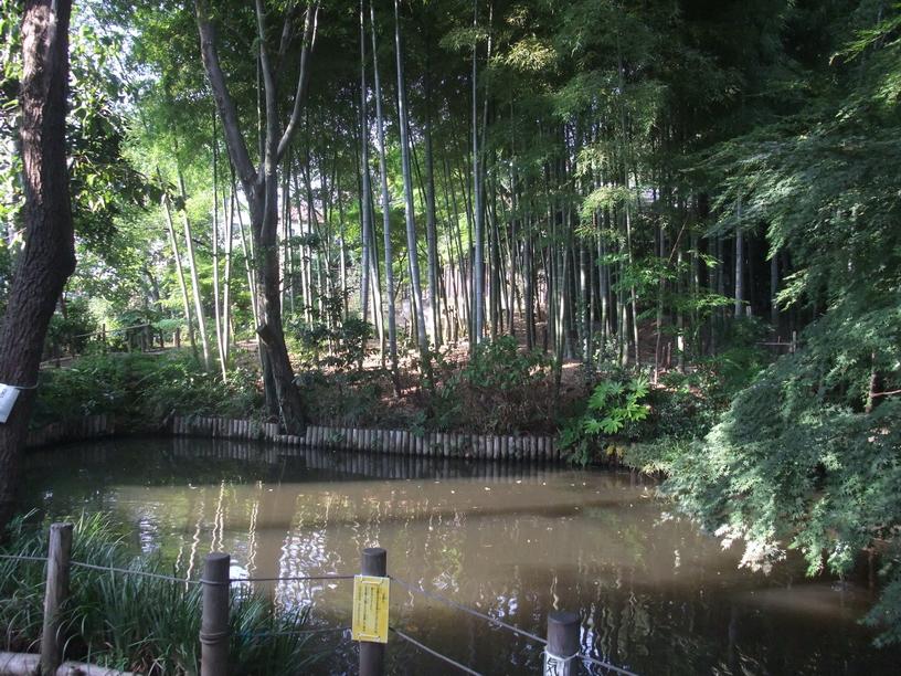 бамбуковая роща.jpg