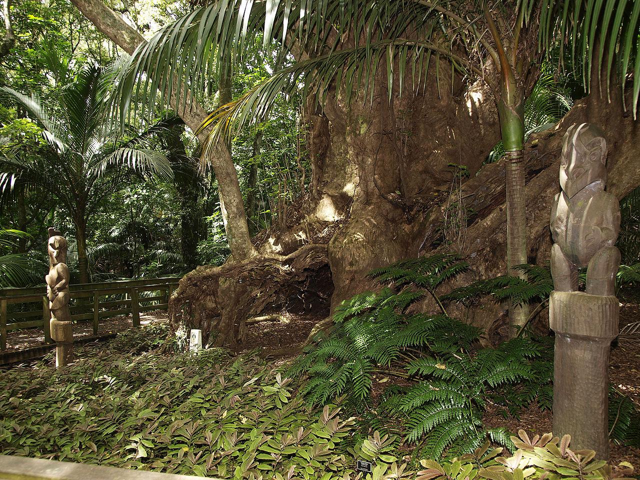 маориOpotiki_Burial_Tree.jpg