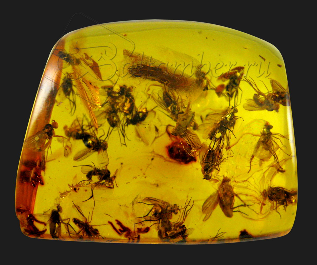 насекомые в янтаре.jpg