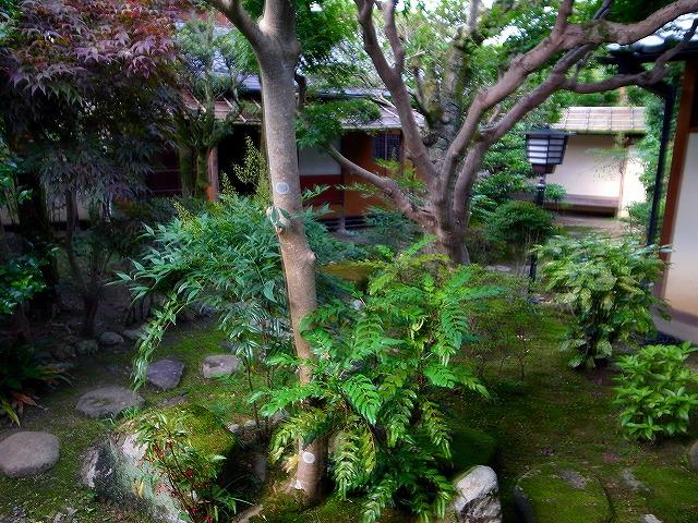 чайный сад 2.jpg