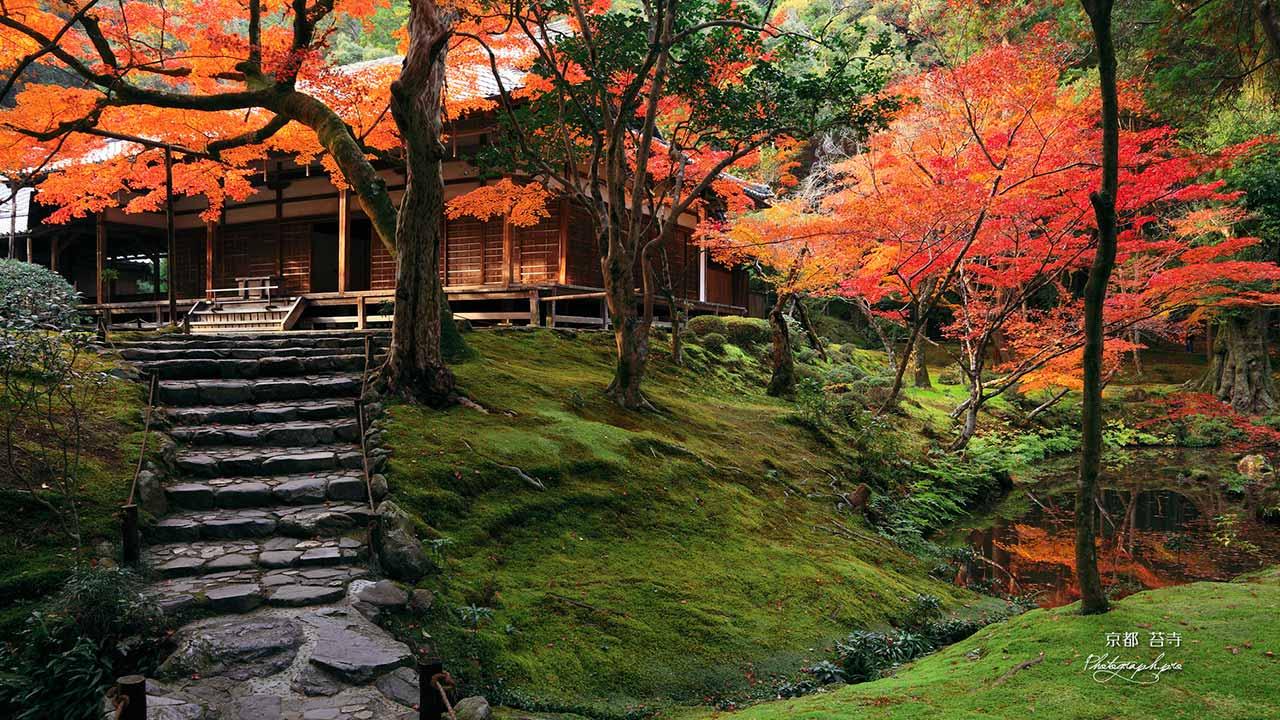100214_kokedera_kokeocha.jpg
