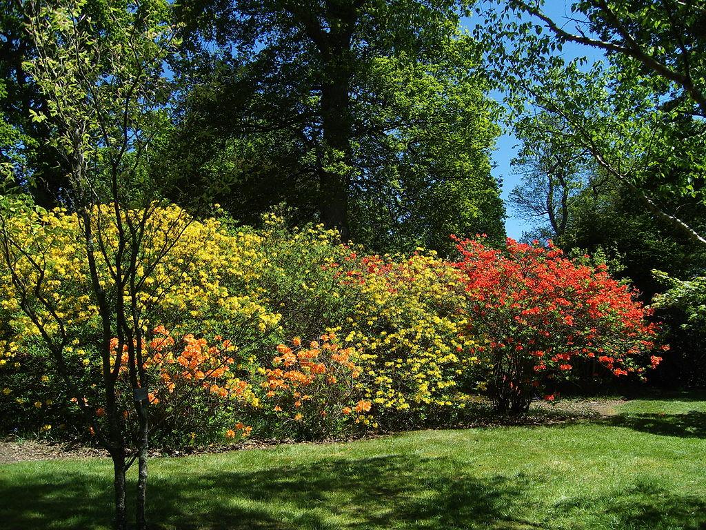 1024px-Sheffield_Park_Garden07.JPG