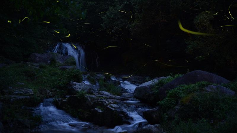 12-Фото светлячков от японца Цунеяки Хирамацу.jpg