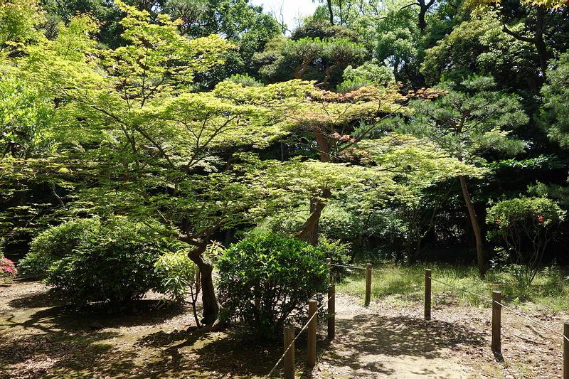 124Имение семьи Мацумото.Сад 2.jpg