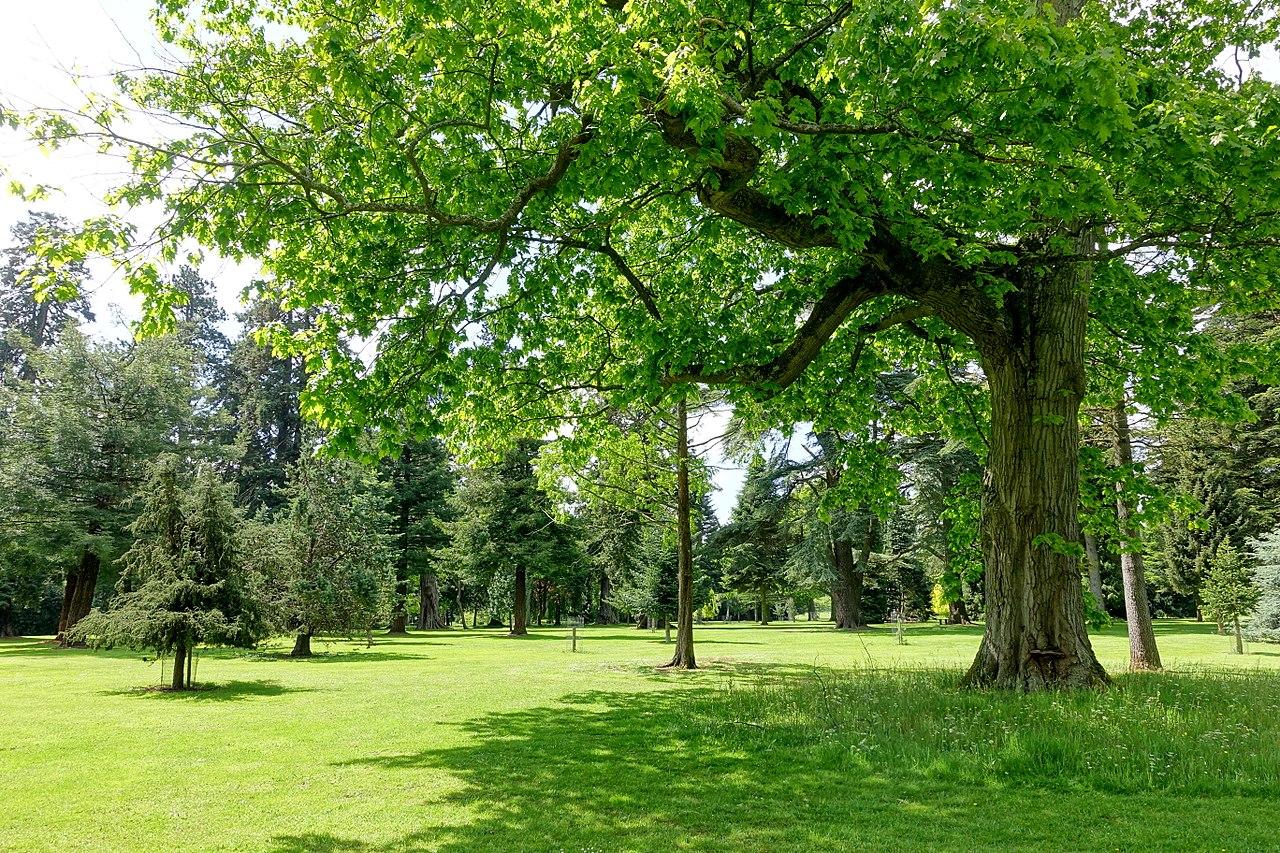 1280px-Bowood_pinetum_-_Wiltshire,_England_-_DSC00421.jpg