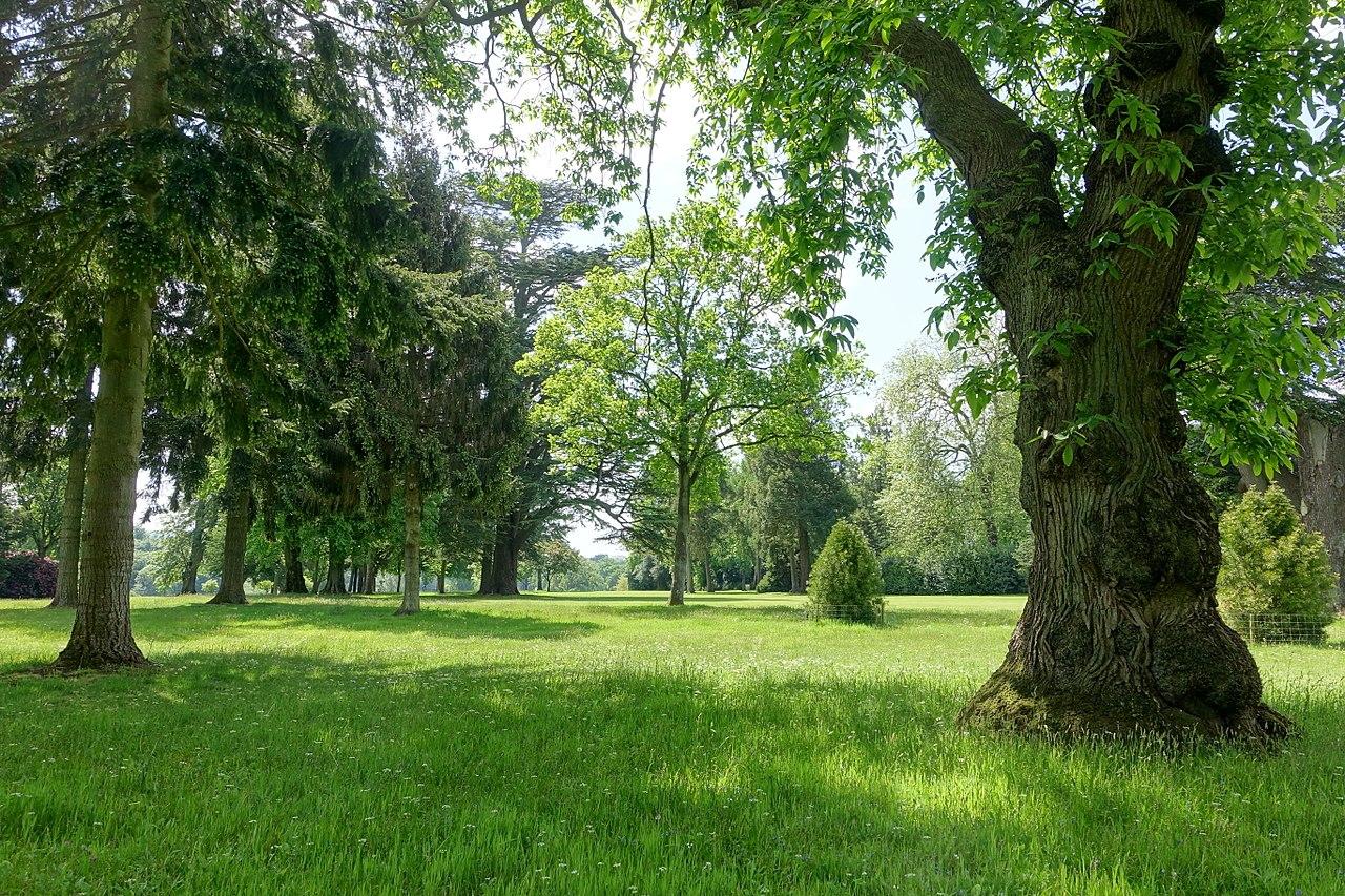1280px-Bowood_pinetum_-_Wiltshire,_England_-_DSC00425.jpg