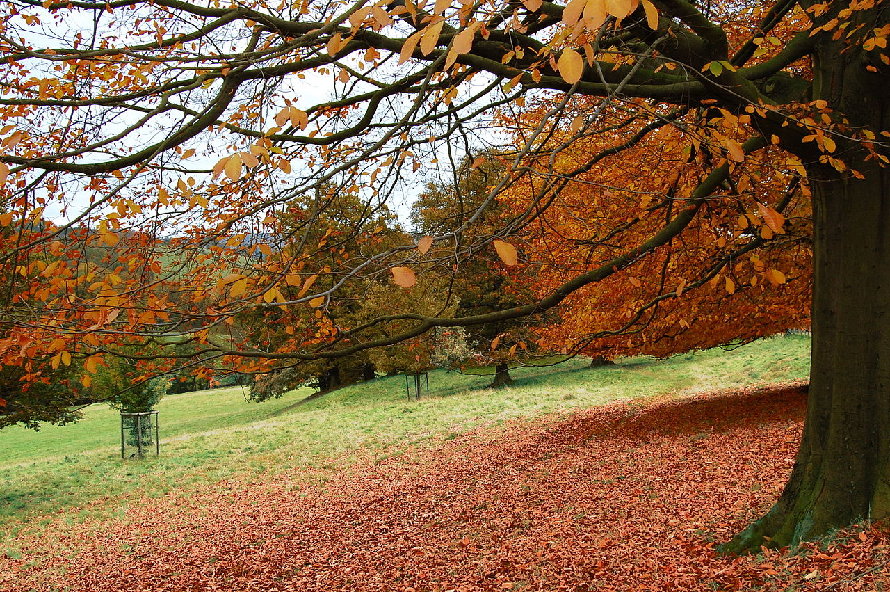 1280px-Flickr_-_Duncan__-_Autumn_^4.jpg