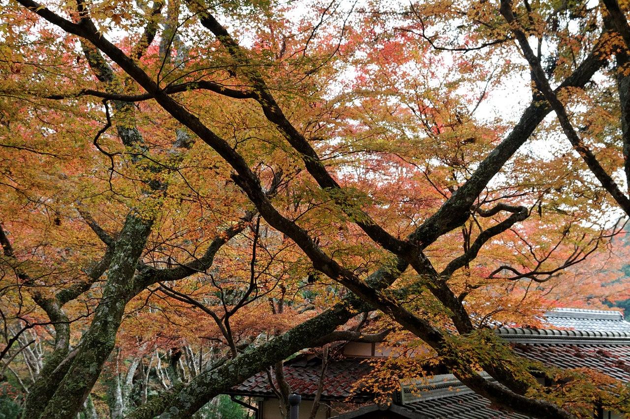1280px-Jingo-ji_(6920614316).jpg