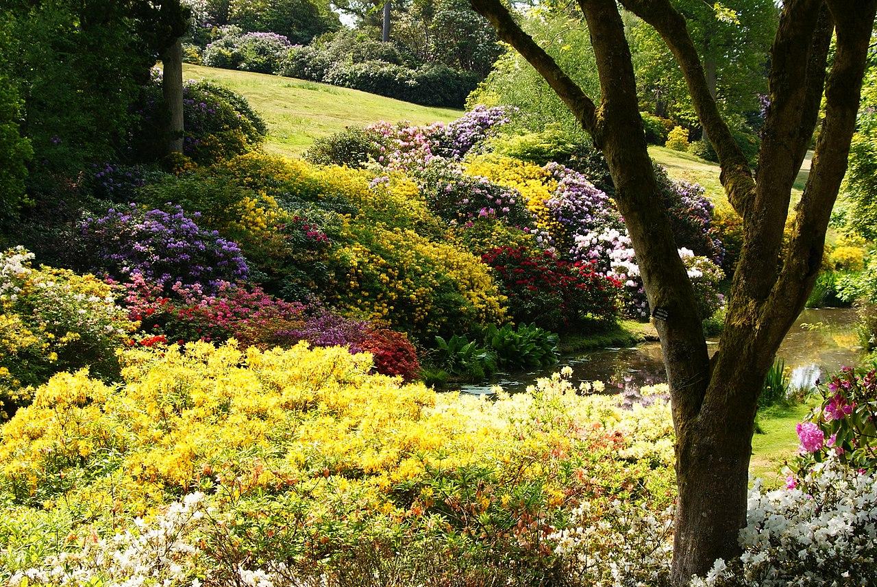 1280px-Leonardslee_Gardens,_Sussex_(2)_(geograph_1906410).jpg