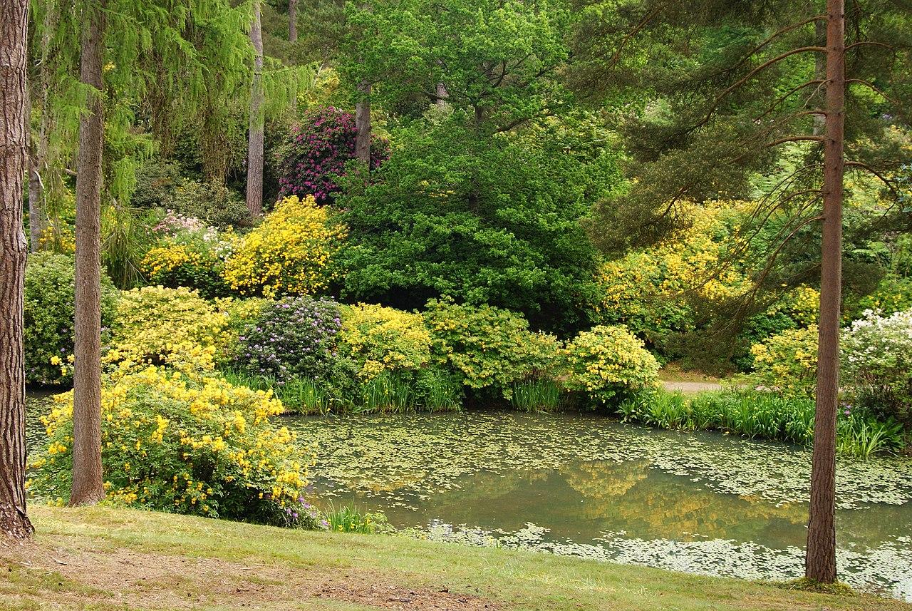 1280px-Leonardslee_Gardens,_Sussex_(7)_(geograph_1906469).jpg