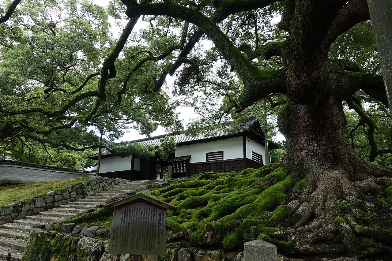 1280px-Old_Tree_Shoren-In_Kyoto_-_panoramio.jpg