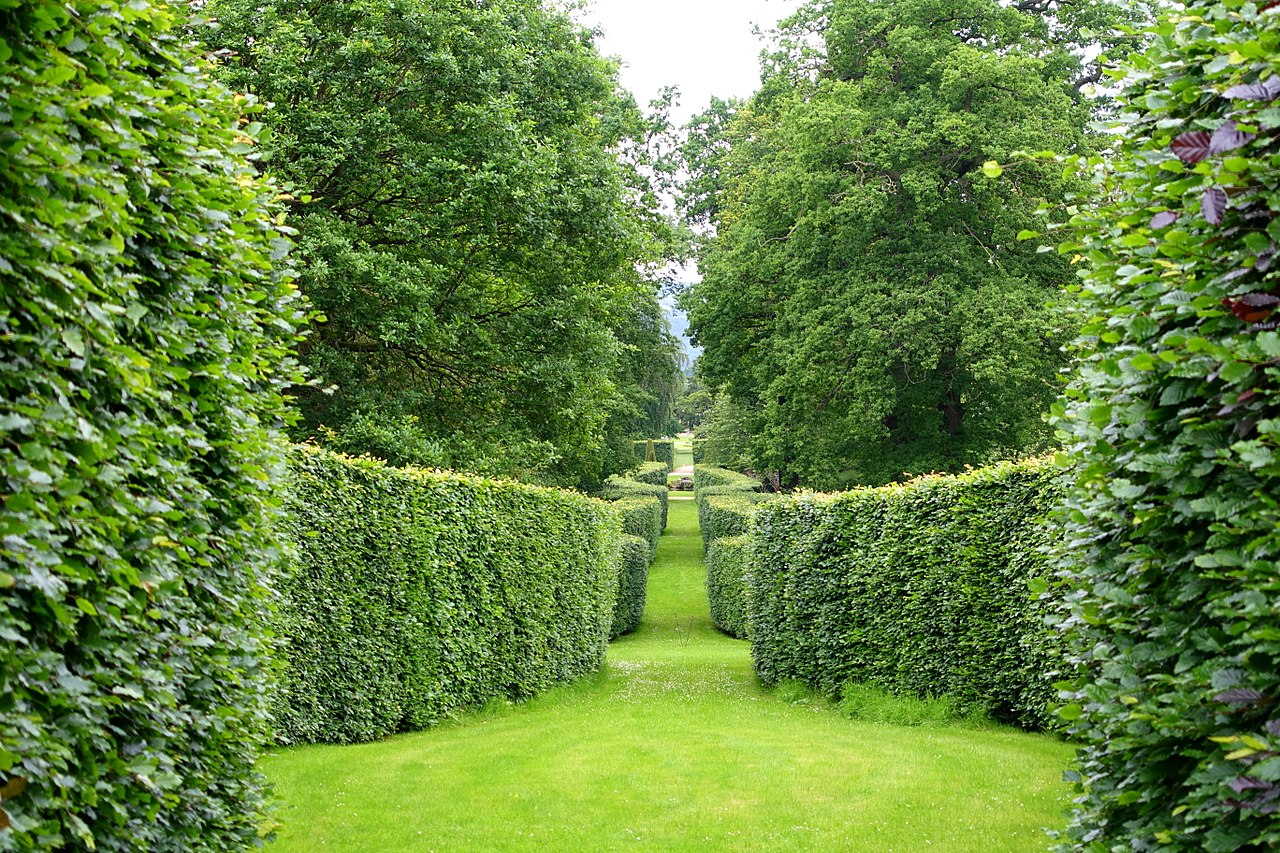1280px-Serpentine_hedge_-_Chatsworth_House_-_Derbyshire,_England_-_DSC03592.jpg