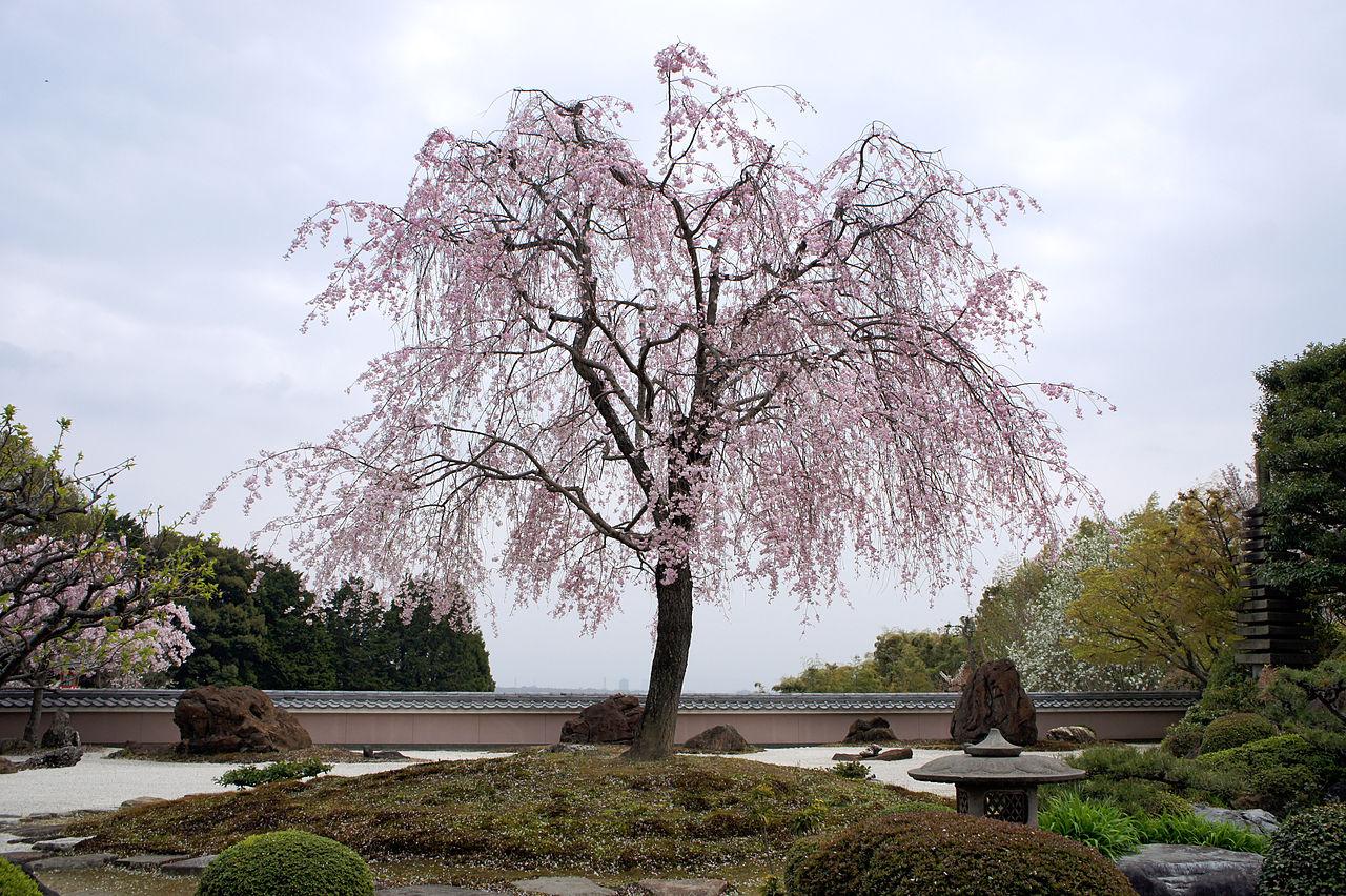 1280px-Shoboji_Nishikyo-ku_Kyoto_Japan16s3s4592.jpg
