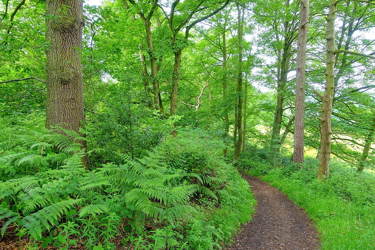 1280px-Woodland_Walk_-_Biddulph_Grange_Garden_-_Staffordshire,_England_-_DSC09256.jpg