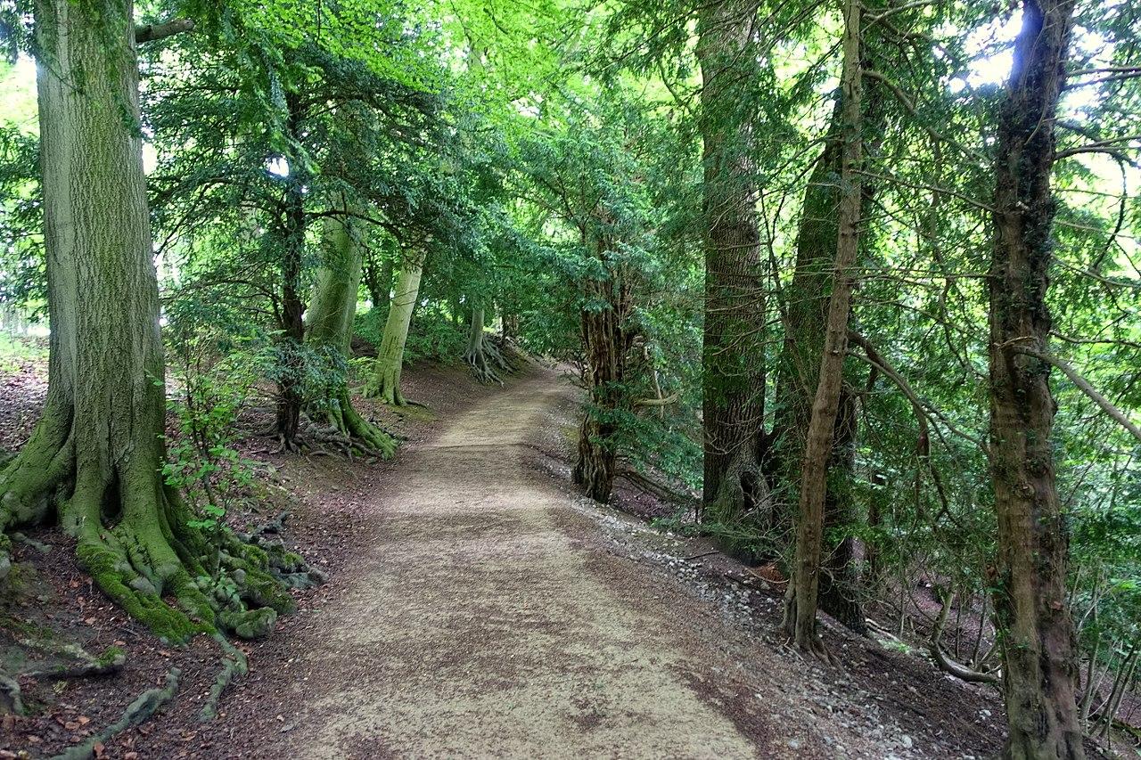 1280px-Woodland_walk_-_Studley_Royal_Park_-_North_Yorkshire,_England_-_DSC00915.jpg