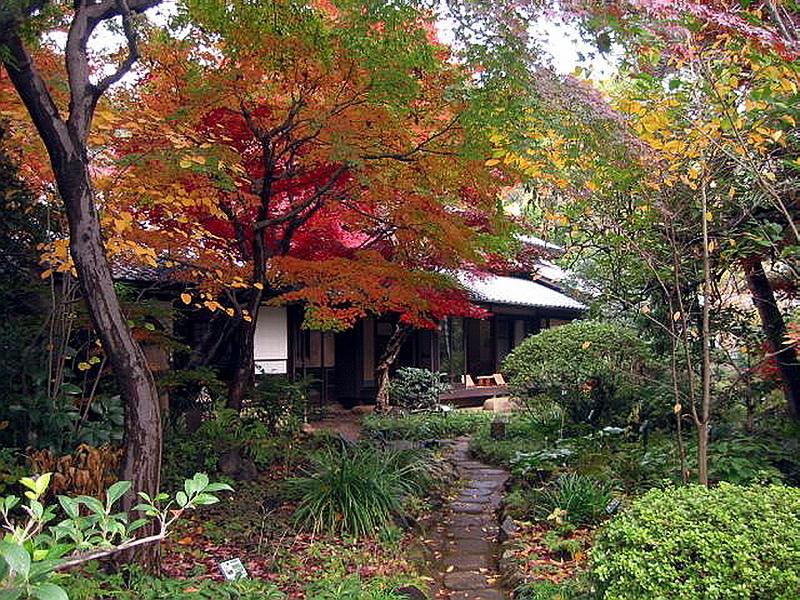 145.Хаяси Фумико.Клёны.jpg