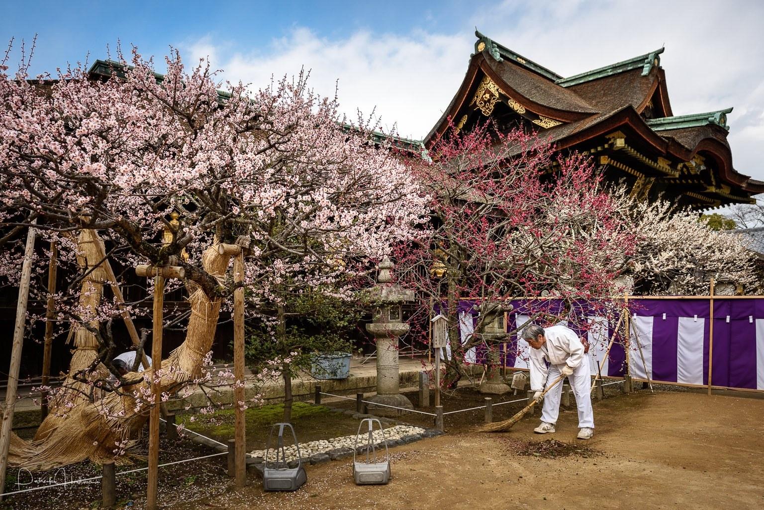 150312_Kyoto-Kitano-Tenmangu-Ume-810967.jpg