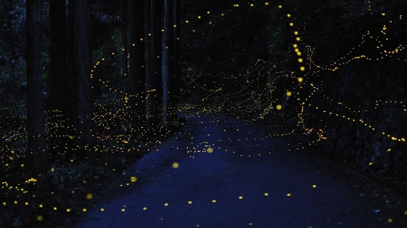16-Лес светлячков от Цунеяки Хирамацу.jpg