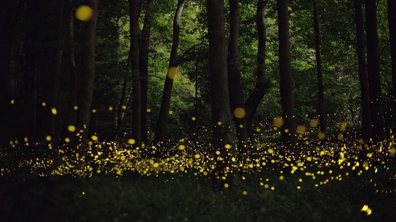 17-Сказка в японском лесу от фотографа Цунеяки Хирамацу.jpg