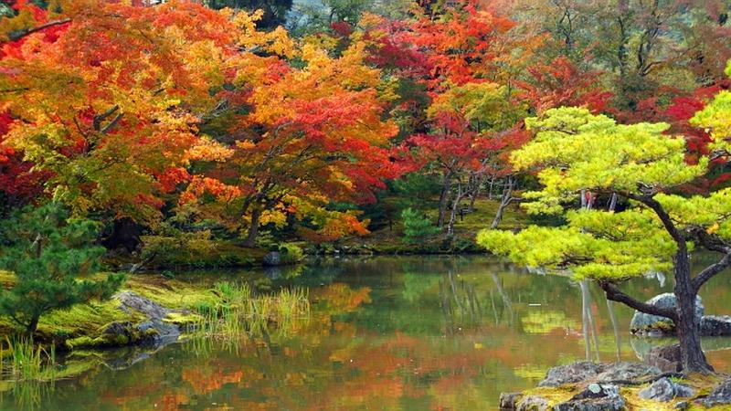 196-4.Кинкаку-дзи.Осень.jpg