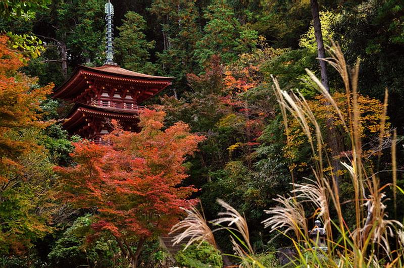 22.Дзёруридзи. Трёхъярусная пагода.jpg