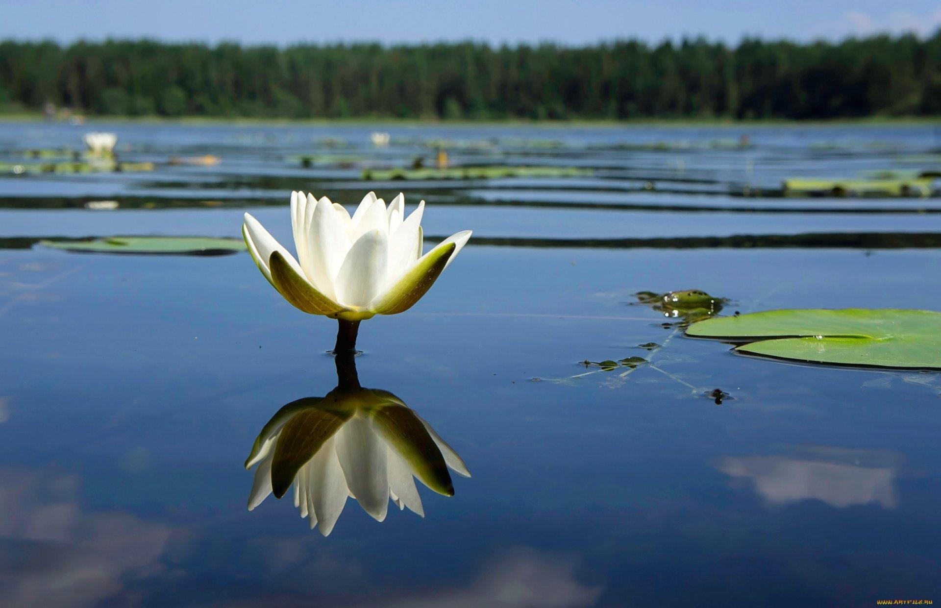 2200x1422_853504_[www.ArtFile.ru].jpg