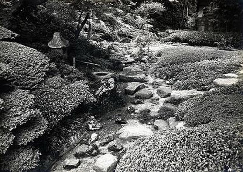 32.Нагао Кинъя.Огико.Чайный сад.jpg