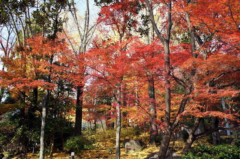 67.Кага Сётаро.Природный сад.jpg