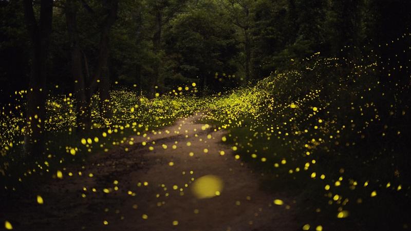 7-Сказочная картина в японском лесу.jpg