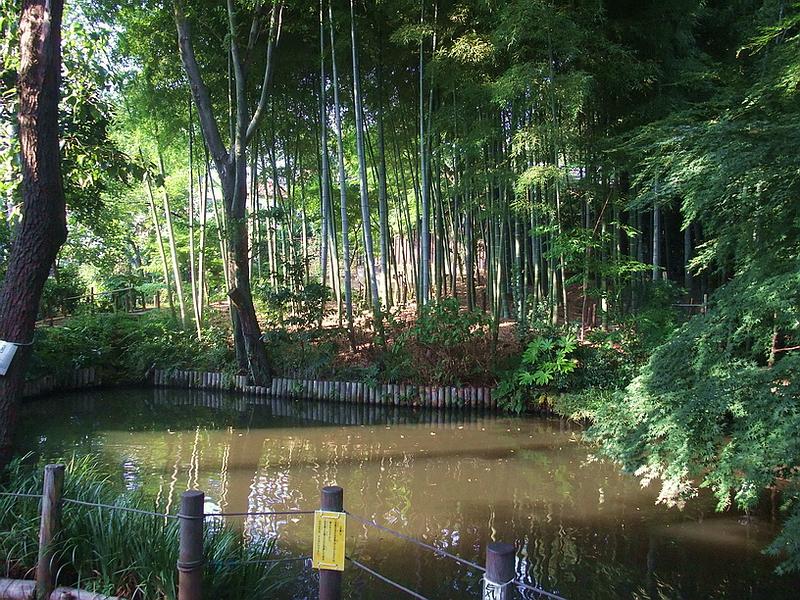 72.Сад Мусянокодзи Санэацу. Бамбуковая роща.jpg