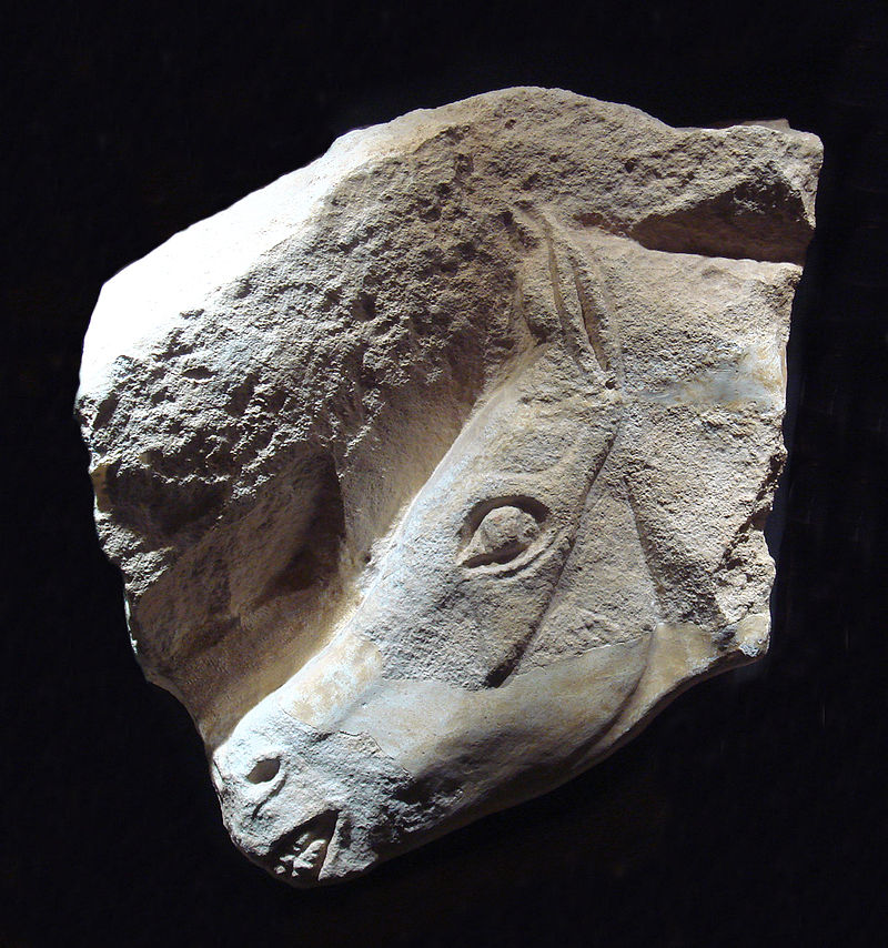 800px-Magdalenian_horse.jpg