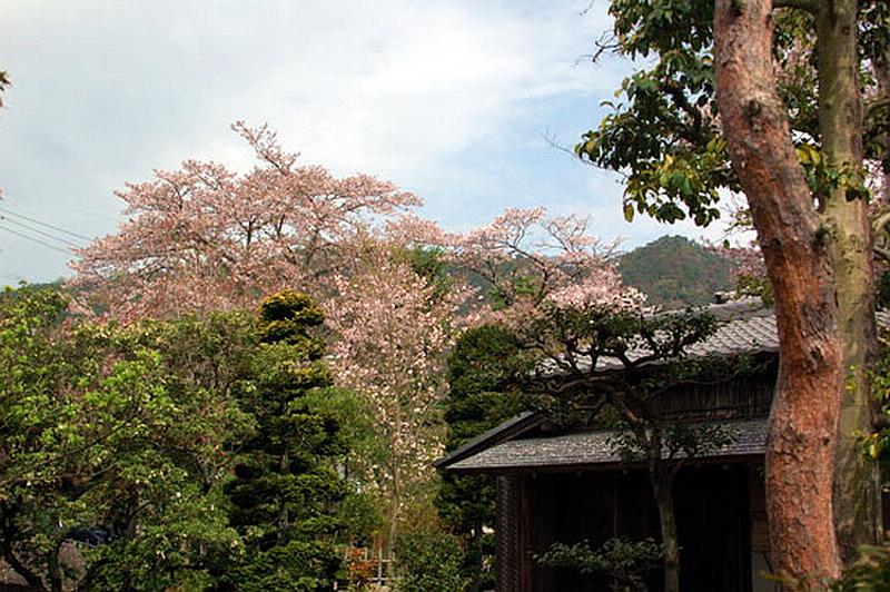 83.Садаякко.Чайный павильон 3.jpg