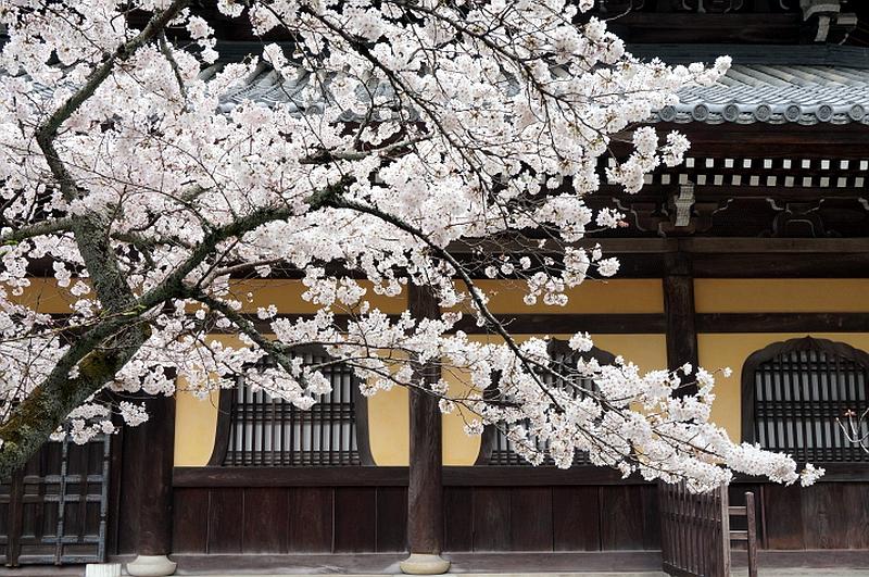 88.Нандзэн-дзи. Сакура перед хатто.jpg