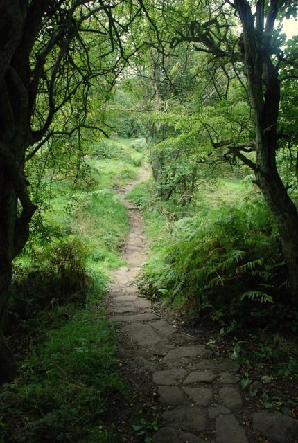 Ancient_pathway_towards_Chatsworth_Park_-_geograph.org.uk_-_553964.jpg