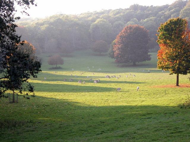 Ashton_Court_Estate_-_geograph.org.uk_-_474676.jpg