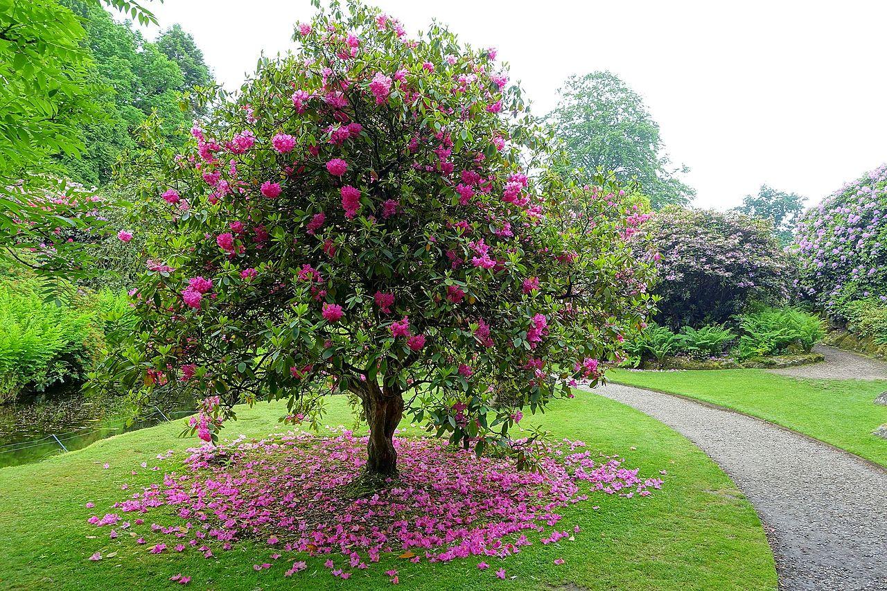 Biddulph_Grange_Garden_-_Staffordshire,_England_-_DSC09128.jpg