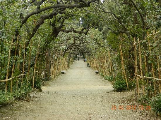 boboli-gardens.jpg