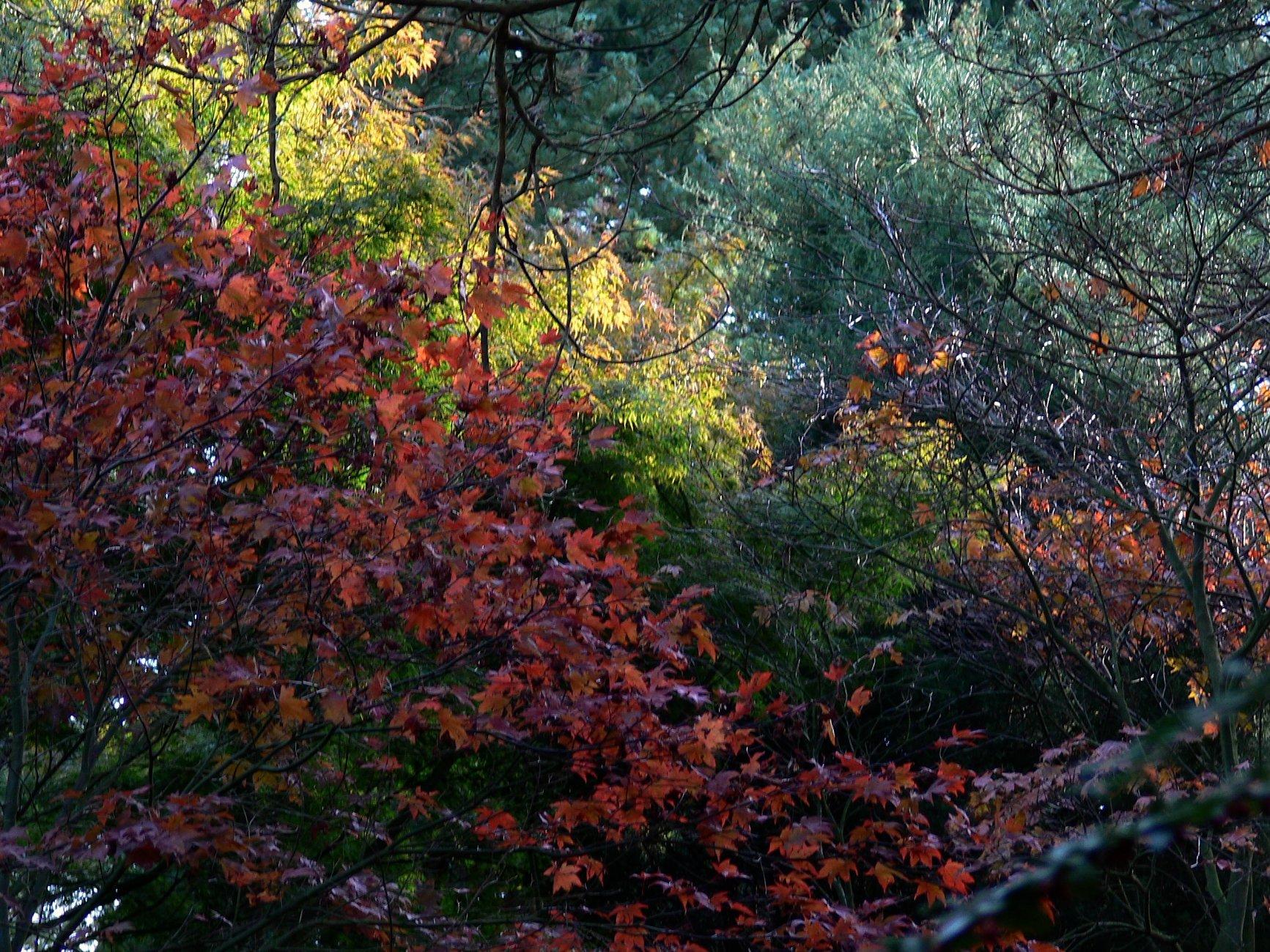 bois-des-moutiers-fall-2012-1-.jpg