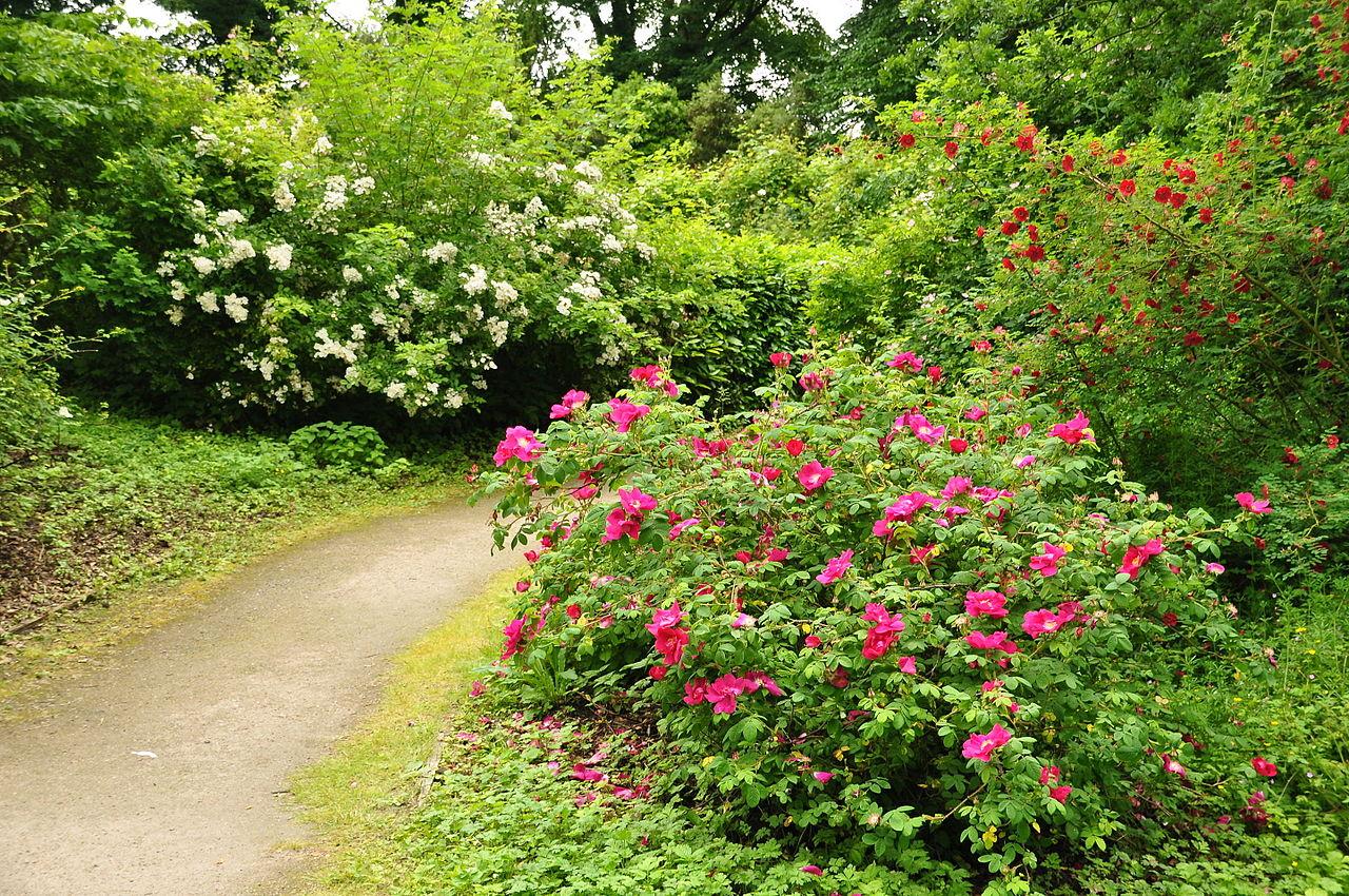 Brodsworth_Hall_gardens_(9306).jpg