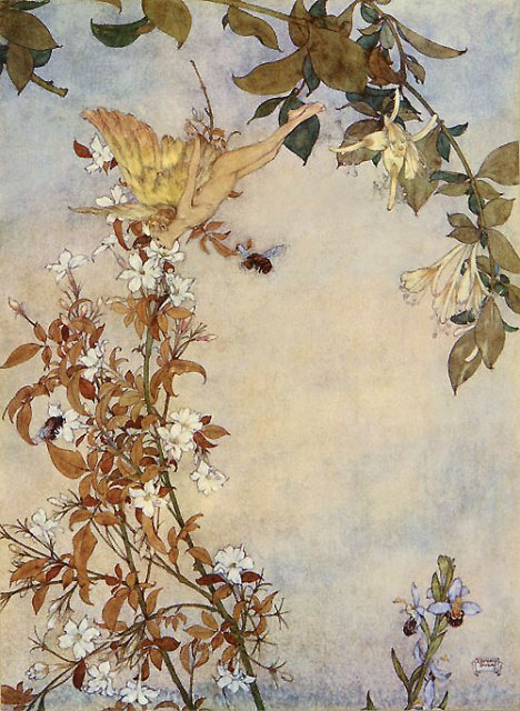 c2a9-edmund-dulac_ariel-and-the-bee.jpg
