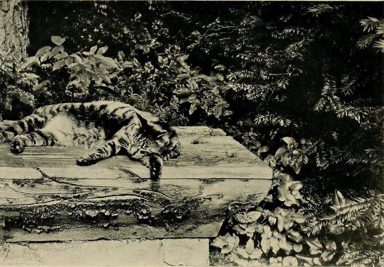 Children_and_gardens_(1908)_(14592250880).jpg