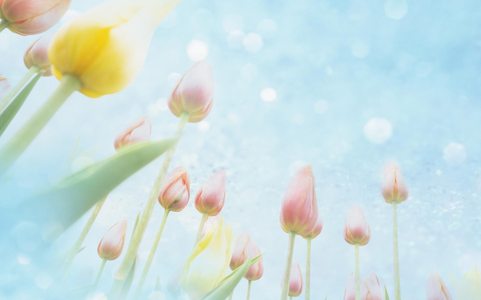 cvety-tyulpany-nebo.jpg