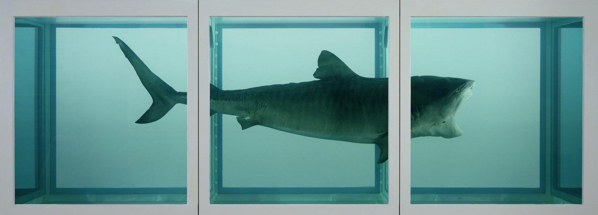damien-hirst-shark.jpg