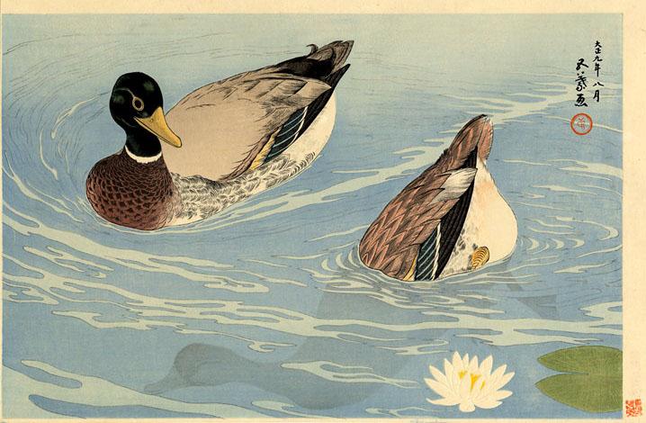 ducks-1920.jpg