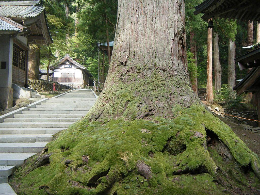 Eiheiji_2010_15.jpg